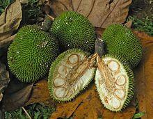 Sukun (pohon) - Wikipedia bahasa Indonesia, ensiklopedia bebas