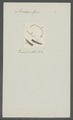 Ascaris apri - - Print - Iconographia Zoologica - Special Collections University of Amsterdam - UBAINV0274 104 03 0020.tif