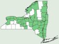 Asplenium rhizophyllum NY-dist-map.png