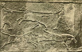 Syrian wild ass - Assyrians lessoning a wild ass.