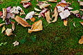 Autumn-leaves-moss - West Virginia - ForestWander.jpg