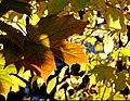 Autumn Afternoon (260572001).jpg