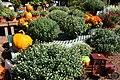 Autumn Display at Garden Shop - 50494728723.jpg