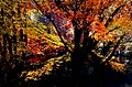 Autumn Hagley Park New Zealand. (8069618999).jpg