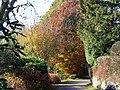 Autumn colours , Rosehall - geograph.org.uk - 598466.jpg