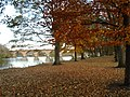 Autumn day along the River Tyne at Hexham - geograph.org.uk - 604718.jpg