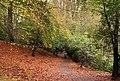 Autumn leaves, Hillsborough forest - geograph.org.uk - 1570718.jpg