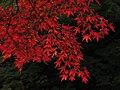 Autumn red - panoramio (2).jpg