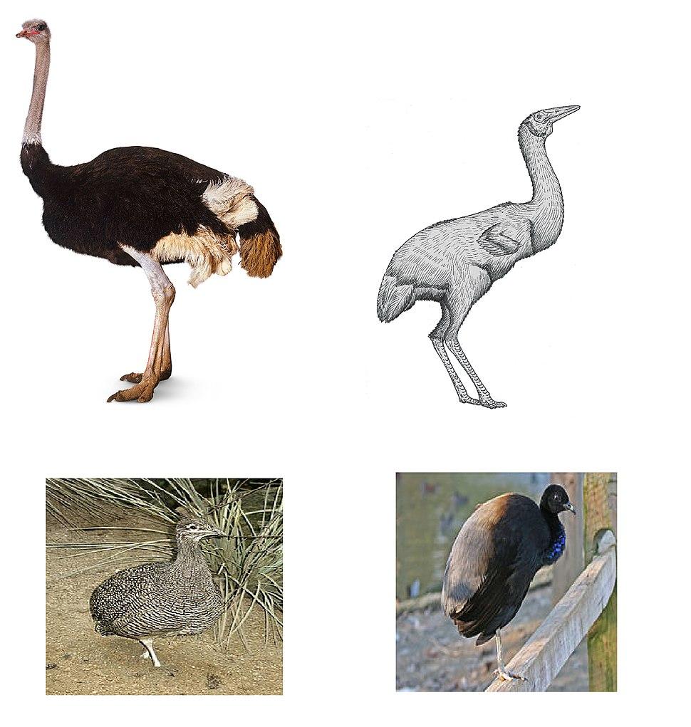 Avian convergence