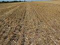 Awesome Cover Crops started in Eastern South Dakota (15127774535).jpg
