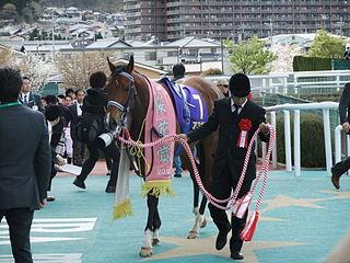 Ayusan Japanese Thoroughbred racehorse