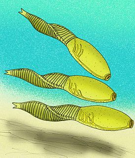 <i>Banffia</i> genus of animals (fossil)