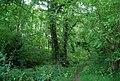 Barnett's Wood - geograph.org.uk - 2121117.jpg