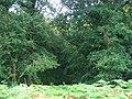 Barnhill Plantation. - geograph.org.uk - 52947.jpg