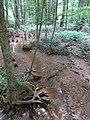 Battle Creek Cypress Swamp 37.jpg