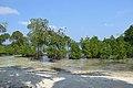 Beach Mangrove 1 (209595417).jpeg