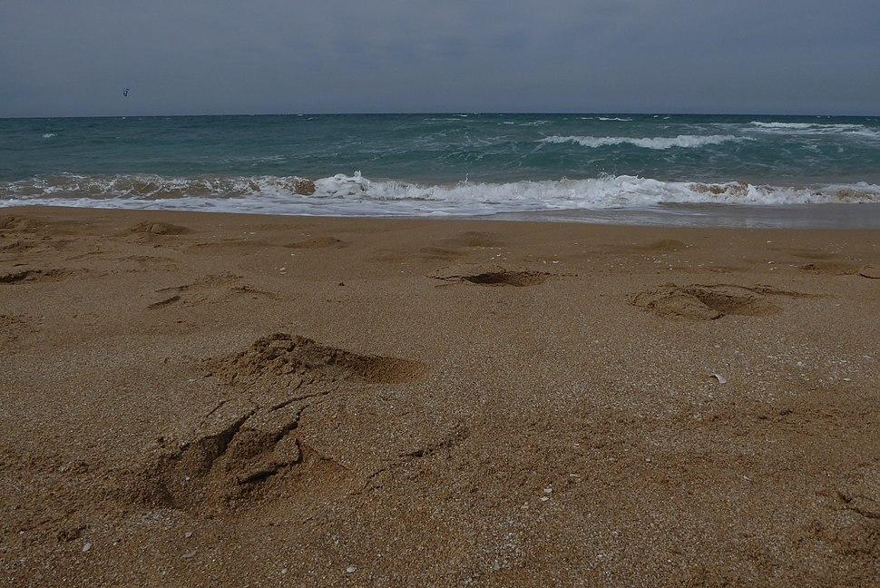 Beaches of Israel 03 2016 (29)