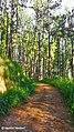 Beauty of Bellwood, Kandy, Sri Lanka.jpg
