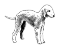 Bedlington terrier (PSF).png