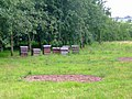 Bee Hives in Cider Apple Orchard - panoramio.jpg