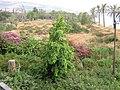 Beit Yerakh Mound תל בית ירח - panoramio.jpg