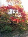 Benxi, Liaoning, China - panoramio (15).jpg