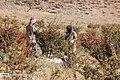 Berberis 13960722 18.jpg