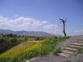 BetShe'an - the Tell El-Husn mountain.jpg