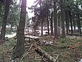 Bielawa, Poland - panoramio (49).jpg