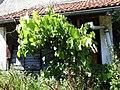 Bienenhotel bei der alten Mühle - panoramio.jpg