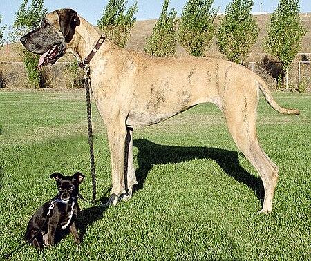 Baka_anjing