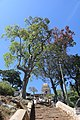Biligiriranga Hills, B R Hills - during PHMSTBGP-2020 (11).jpg