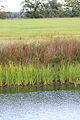 Biotop (Oderauen) (9631582014).jpg
