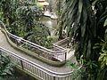 Bird Park in Kuala Lumpur (Malaysia) (24).jpg