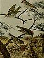 Bird lore (1908) (14770757503).jpg