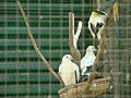 Birds in Captivity.jpg