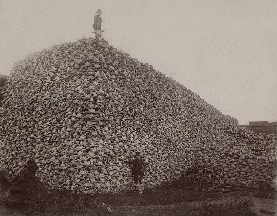 Bison skull pile edit