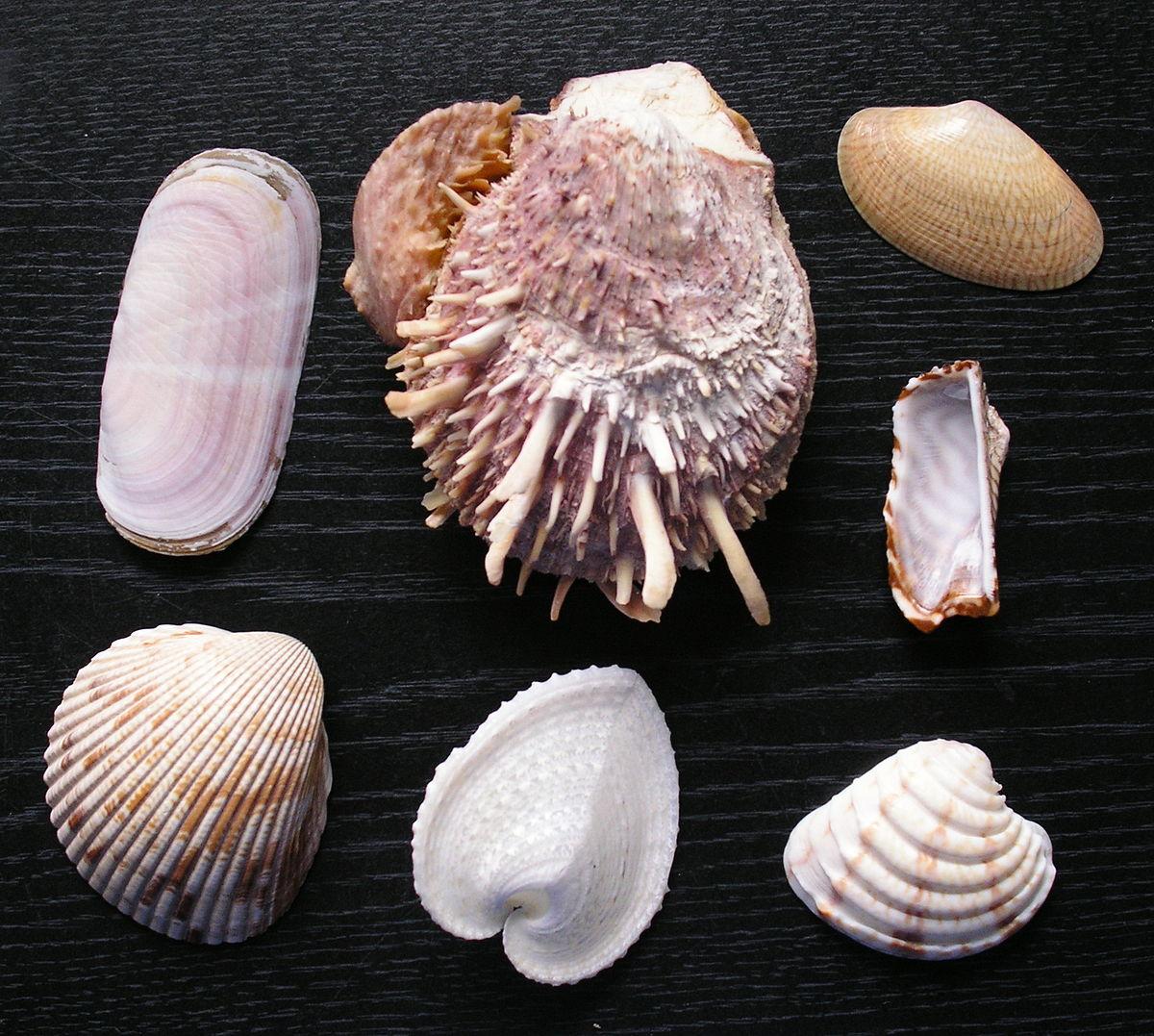 lehetnek e kagylók kagylókban