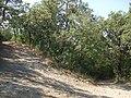 Bivio Sentiero CAI per il monte Le Civitelle - panoramio.jpg