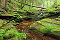 Black Forest Trail (Revisited) (1) (21173740206).jpg