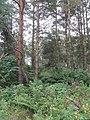 Black Rig Plantation - geograph.org.uk - 949485.jpg