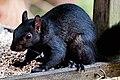 Black Squig (37313961110).jpg