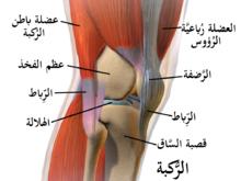 bdc458feb التهاب مفاصل الركبة - ويكيبيديا، الموسوعة الحرة