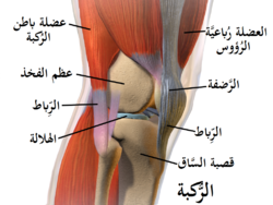 Blausen 0597 KneeAnatomy Side-ar.png
