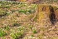 Bledule jarní v PR Králova zahrada 45.jpg