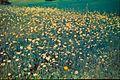 Blomstereng - 7300159196.jpg