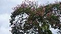 Blooming tree (37388325884).jpg