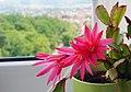 Blossoms - panoramio.jpg