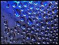 Blue drops - Flickr - Stiller Beobachter.jpg
