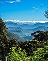 Blue mountains through forest.jpg